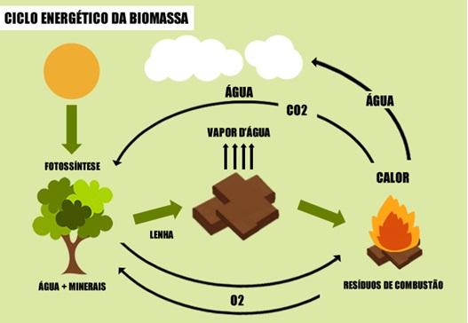 Energia biomassa confira vantagens e desvantagens